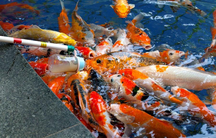 даун рожденный под знаком рыбы