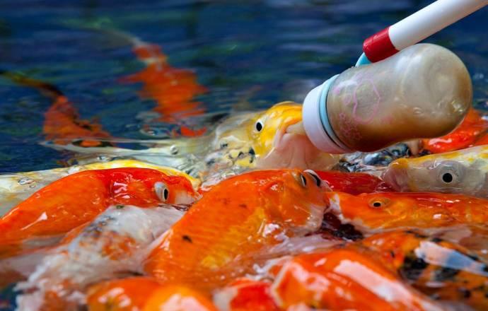 имя для девочки по знаком рыбы
