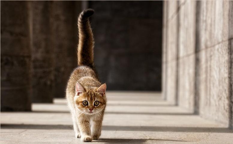 Картинки по запросу Хвост у кошки. Для чего он?
