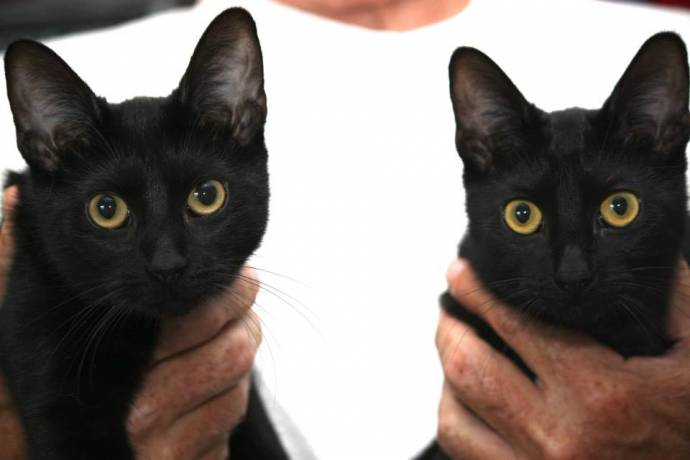 Праздник черного кота