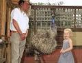 Многодетная семья держит в качестве домашнего питомца страуса
