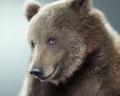 Потрясающие портреты медведей от Джилл Гринберг