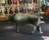 В австрийский магазин за покупками пришла корова.