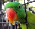 Украденный вором попугай опознал хозяина в зоомагазине