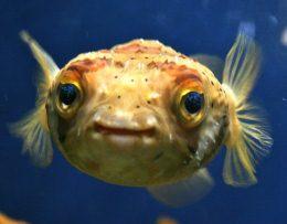 Как видят рыбы?