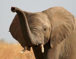 Ученые узнали, у кого из млекопитающих лучшее обоняние