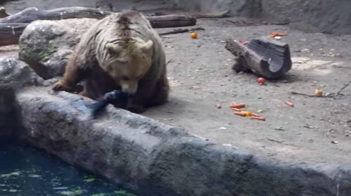 Медведь спас от гибели тонущую ворону