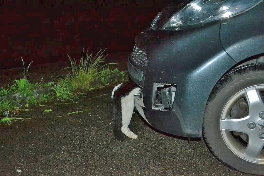 Картинки с машинами и котом