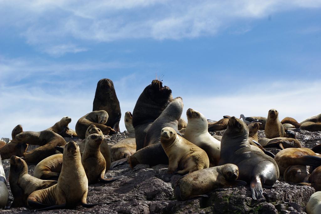 тюленей моржей и котиков