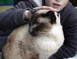 В Новой Зеландии кот десять лет жил на две семьи.