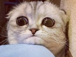 Малышка Пи - Самая грустная кошка в мире