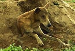 Верный пес 15 дней просидел на могиле хозяина