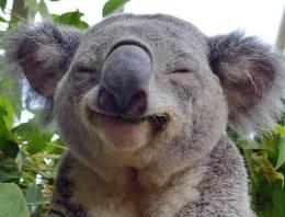 Пожарные спасли коалу, сделав ей искусственное дыхание