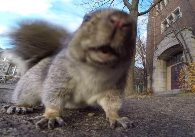 Белка украла камеру GoPro и прославилась на весь интернет