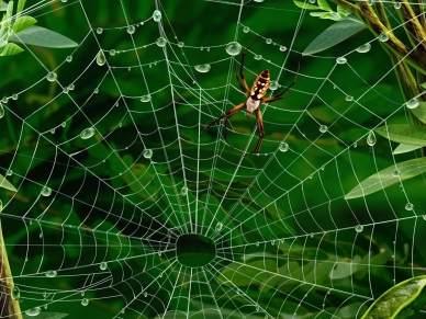 По удивительным моделям живой природы