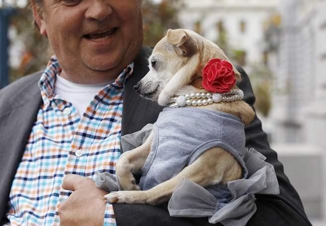 Чихуахуа на один день стала мэром Сан-Франциско