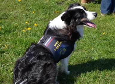 В Бердске выбрали лучших собак-спасателей России