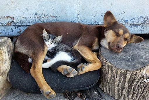 В Липецке собака выкармливает молоком котенка и его маму