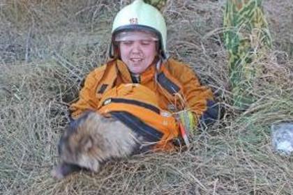 Сотрудники белорусского МЧС спасли енотовидную собаку