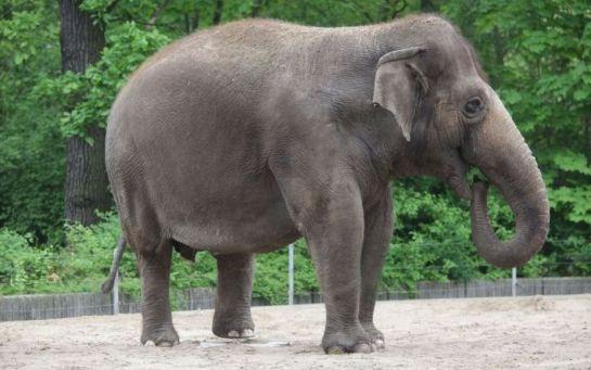 Во Франции построят дом престарелых для слонов