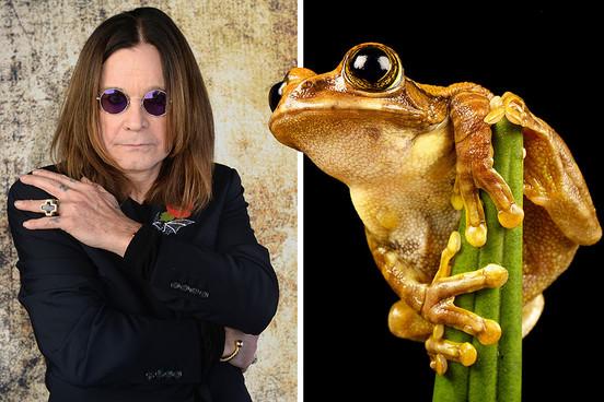 Новый вид лягушек назвали в честь Оззи Осборна