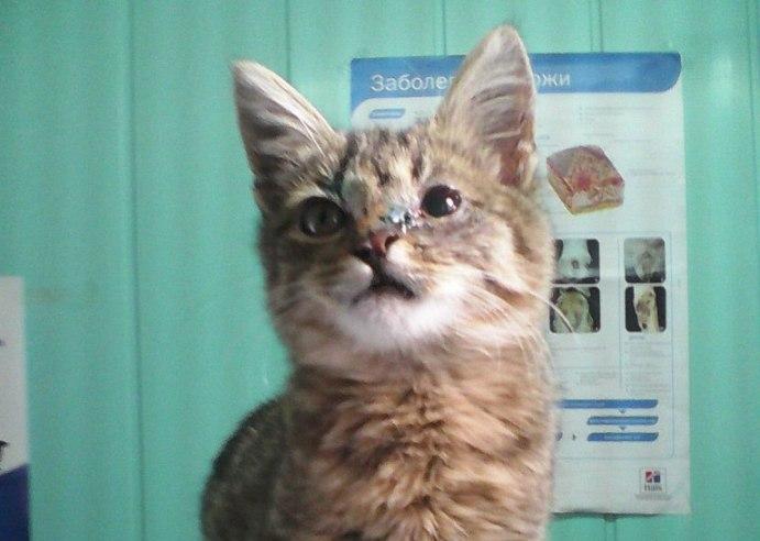 Воронежская полиция возбудила дело по статье и ищет мучителей котенка