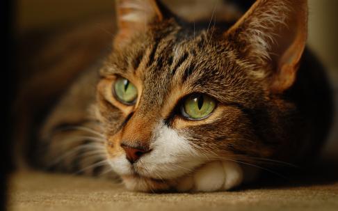 В Краснотурьинске кот предупредил хозяина о пожаре