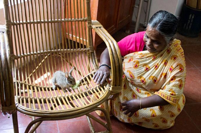 В Индии семья выхаживает найденного лесного зайчонка
