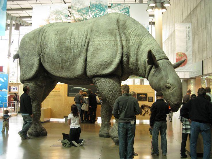 самые большие животные за всю историю земли полезен