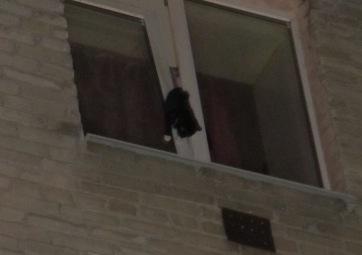 В Тюмени спасатели вызволили застрявшего в окне кота