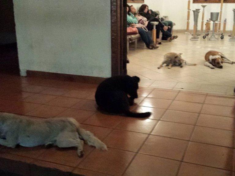 Бродячие собаки пришли на похороны женщины, которая их кормила