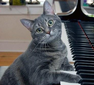 Ученые создали специальную музыку, которая делает кошек ласковыми