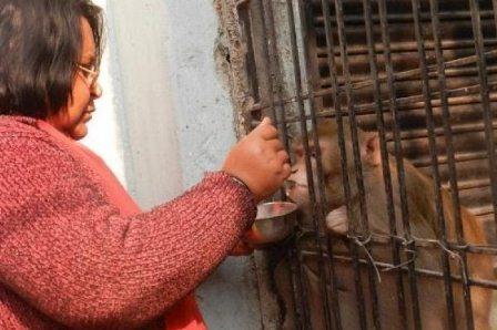 Богатая индийская семья завещала все состояние любимой обезьяне