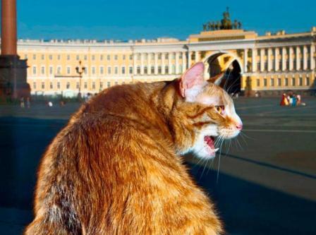 Тихон - главный кот Эрмитажа