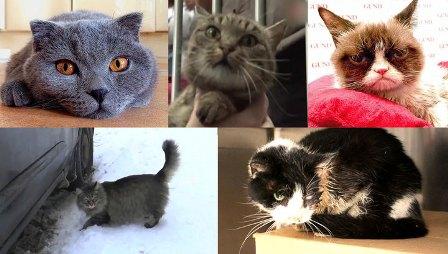 1 марта-Международный день кошек: Пять историй, которые нас удивили