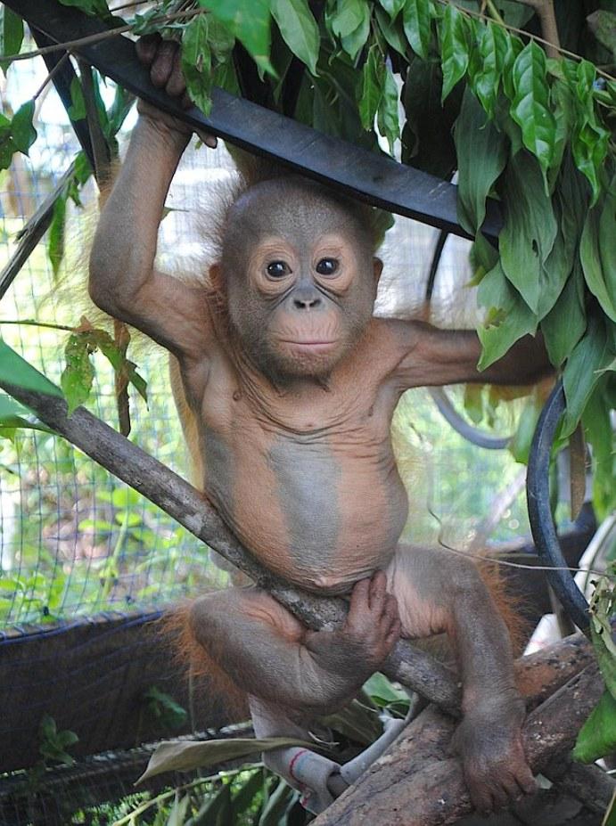 игры орангутан