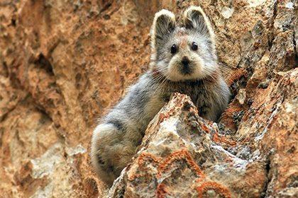 В Китае обнаружили редкого «волшебного кролика»