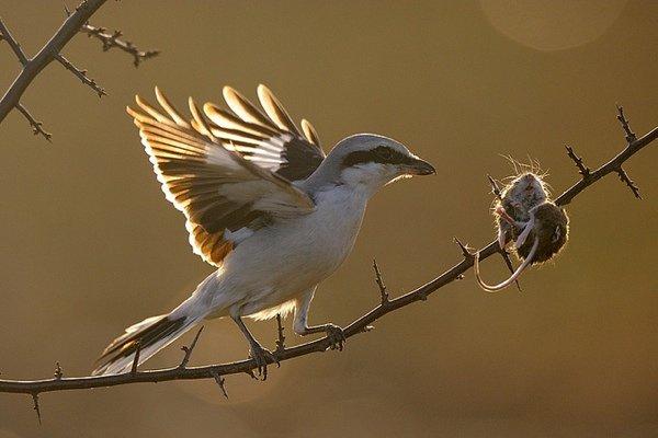 Самые-самые птицы