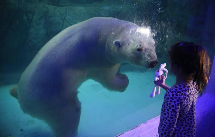 Полярные медведи из России дебютировали в зоопарке Бразилии