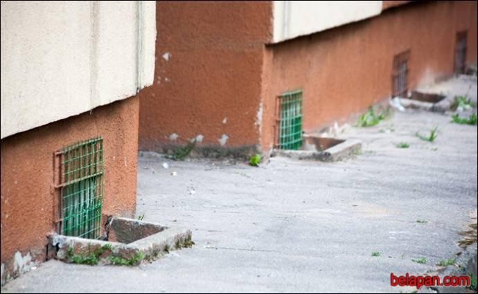 Белорусские волонтеры спасли 11 котов из замурованного подвала