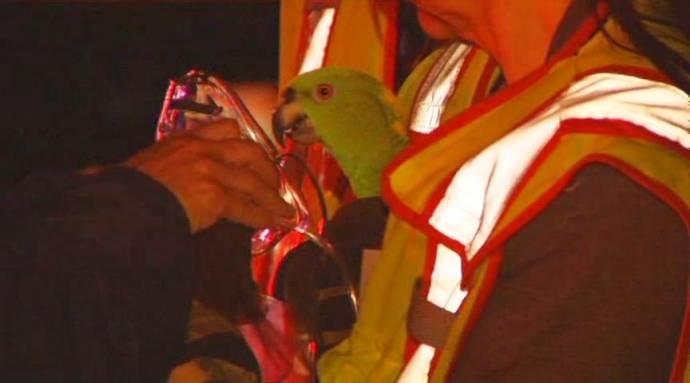 Пожарные в США спасли двух попугаев, звавших на помощь