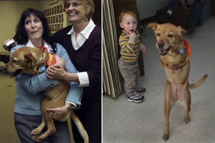 Животные -инвалиды: «Мы тоже хотим жить!»