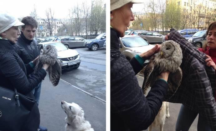 В Санкт-Петербурге сову спасли от ворон