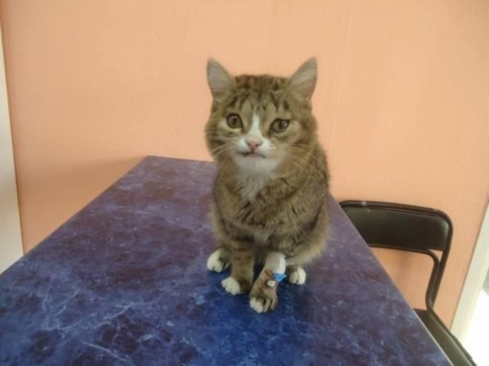 Кота с необычной мордой спасли в Новосибирске