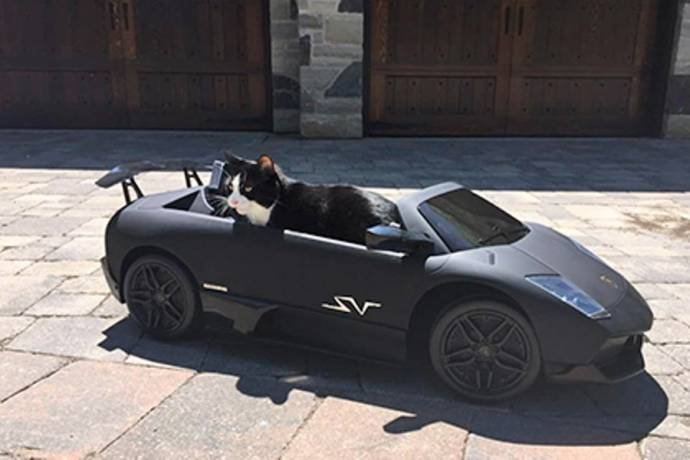Канадский ди-джей подарил своему коту мини-Lamborghini