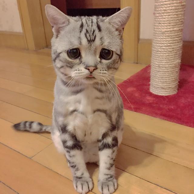 Грустная кошка Луху