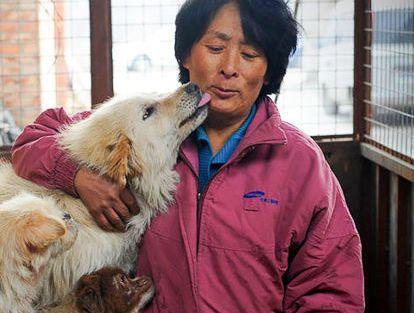 Жительница Китая спасла 100 собак от участи стать блюдом в ресторане