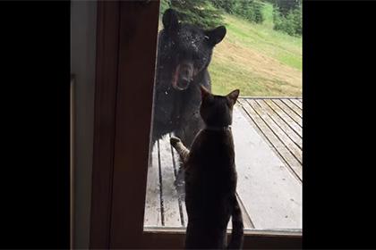 На Аляске домашняя кошка напугала дикого медведя