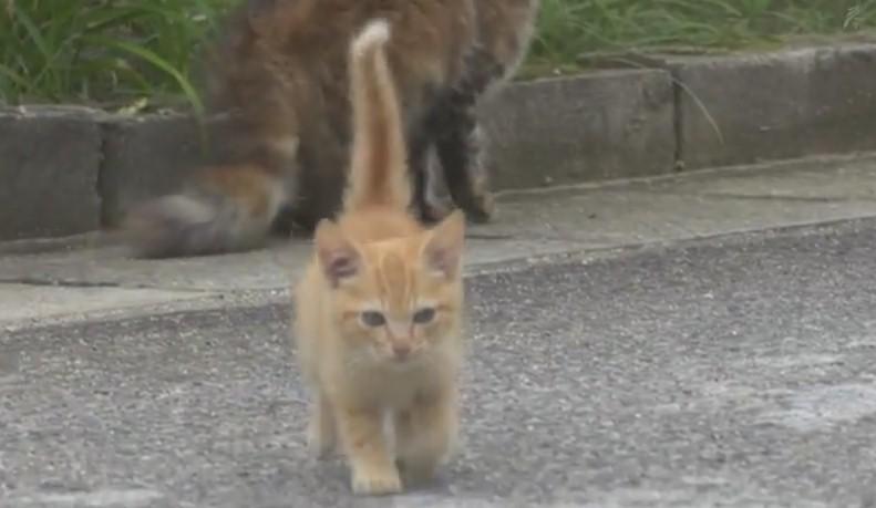 В Японии уличный котенок подружился с фотографом