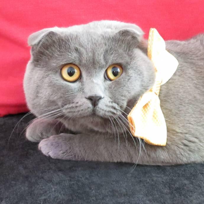 Румынская фирма взяла кота на должность менеджера по рекламе